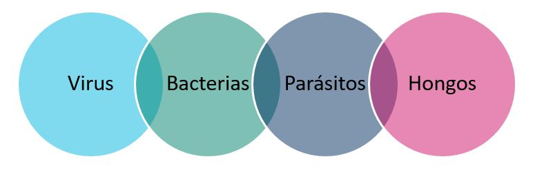enfermedades producidas por patógenos